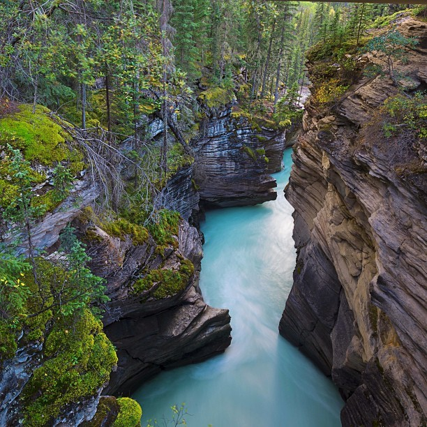 Gorgeous colours on display at Athabasca Falls via @laurenepbath