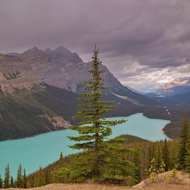 Peyto (pea-toe) Lake, Alberta via @garry_norris